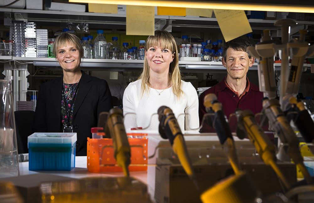 Ulrika Warpman Berglund, Teresa Sandvall och Jeffrey Yachnin. Jeffrey leder den kliniska studien, Teresa är en länk mellan klinik och preklinik och Ulrika leder den preklinska forskningen och hela biomarkörforskningen. Foto: Johan Marklund