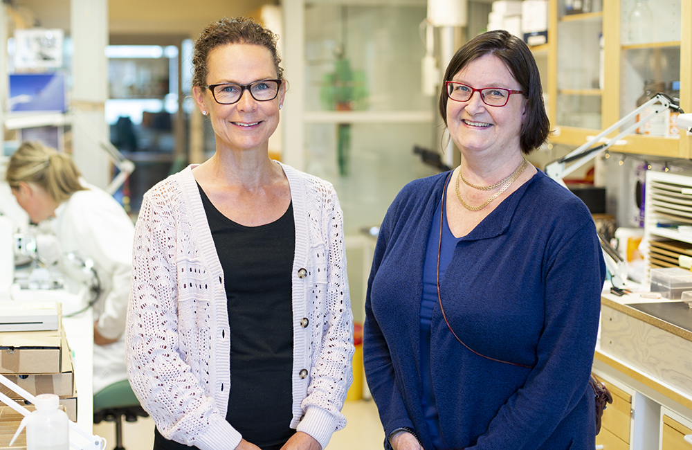 Pernilla Wikström, professor i tumörbiologi och Maréne Landström, professor i patologi vid Umeå universitet. Foto: EdelPhoto